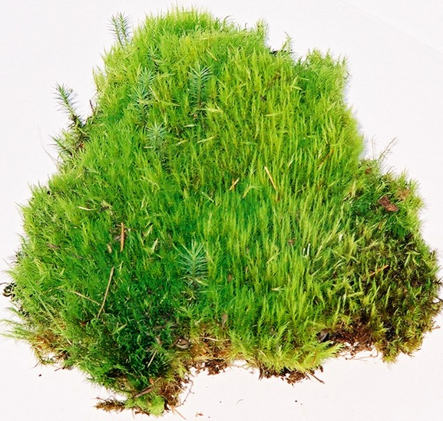 D) Large Fresh Mood Moss Case