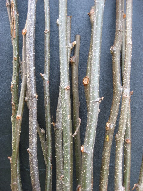 N) Alder Sticks 36 to 40 in. long 1 in. wide 30 per case