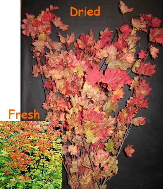A) Fall Colored Leaf Branches. 80 stems/case