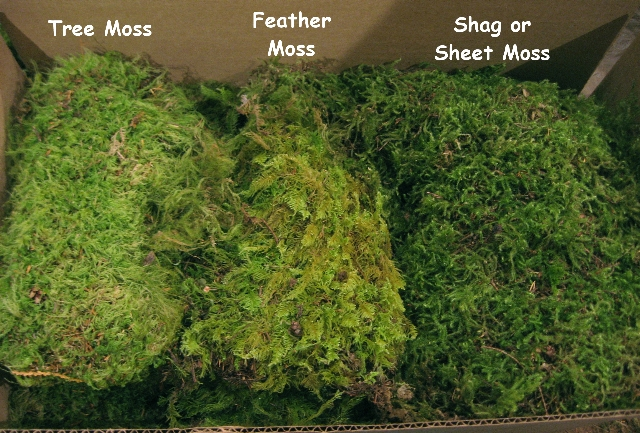 A) Moss Sample Case Dried