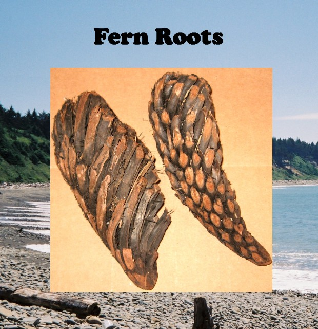 Fern Roots .50 cu. ft. box Only $14.00