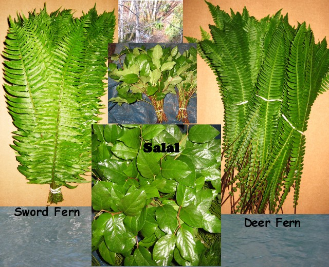 Deer Fern, Sword Fern & Salal Mix. 400 Stems OUT OF SEASON
