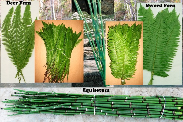 Deer & Sword Fern & Equisetum 300 Stems