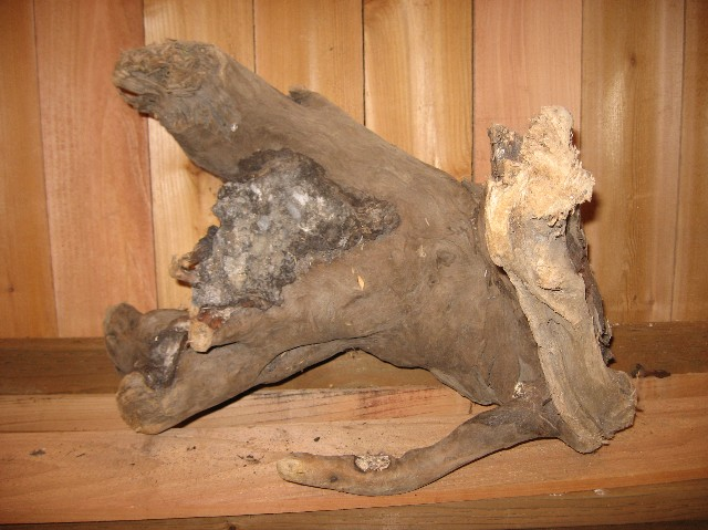B4) Driftwood Specimen 27 in. Long x 27 in. High