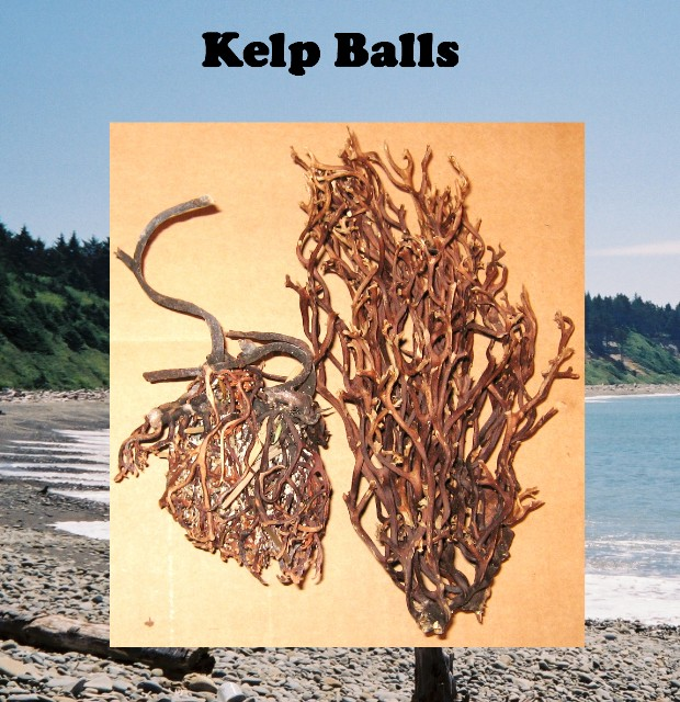 Kelp Balls .50 cu. ft. box Only $14.00